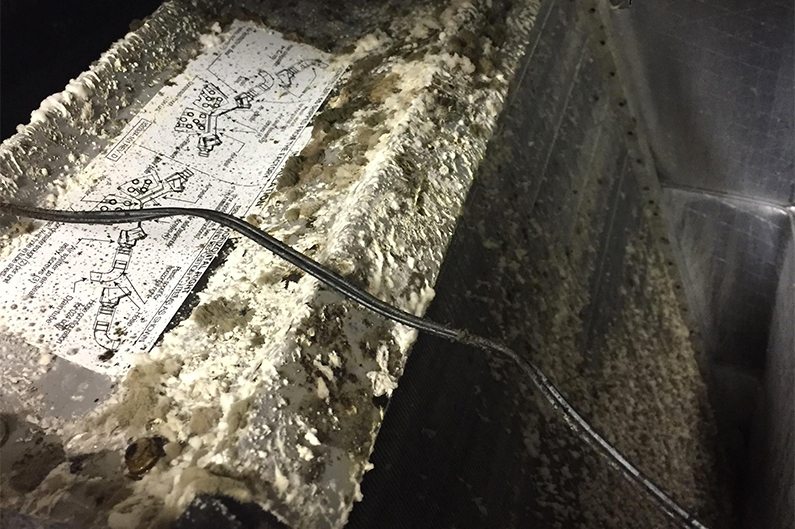 Cleaning Mold In Heater Vents Abc Cleaning Inc Air